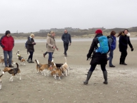 15e Big Beaglewalk IJmuiden 21 februari 2016 - serie 2