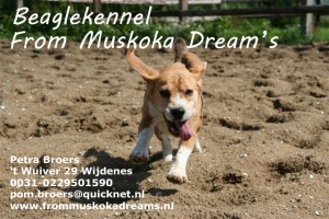 Beaglekennel From Muskoka Dream's
